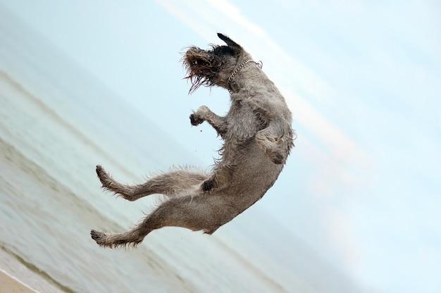 Der hund springend in den strand Kostenlose Fotos