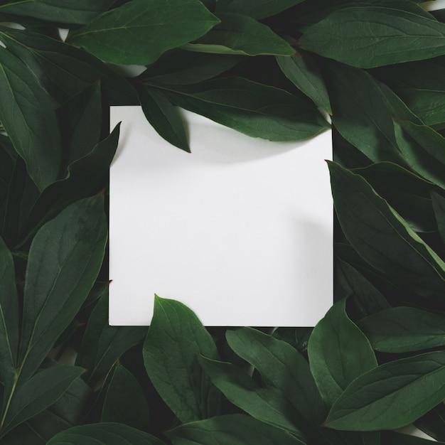 Der kreative plan, der vom grün gemacht wird, verlässt mit leerem freiem raum für anmerkung über schwarzes Premium Fotos