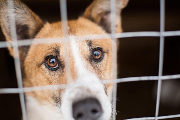 Der obdachlose hund hinter den gitterstäben sieht mit großen, traurigen augen aus Premium Fotos