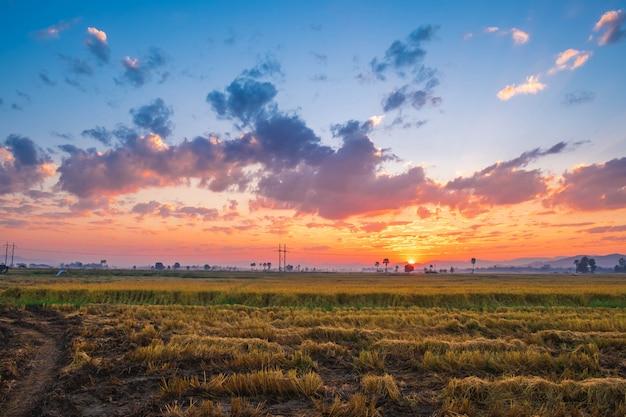 Der sonnenuntergang auf dem reisfeld Premium Fotos