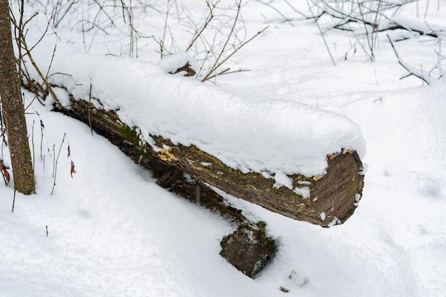 Der stamm eines gefällten baumes, der im winterwald mit schnee bedeckt ist Premium Fotos