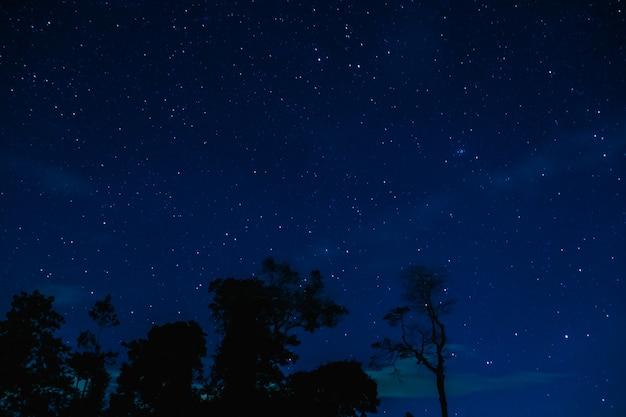 Der sternenhimmel im nachtwald Premium Fotos