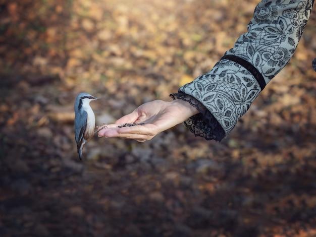 Der vogel frisst futter aus seiner hand. vögel in der natur füttern. Premium Fotos