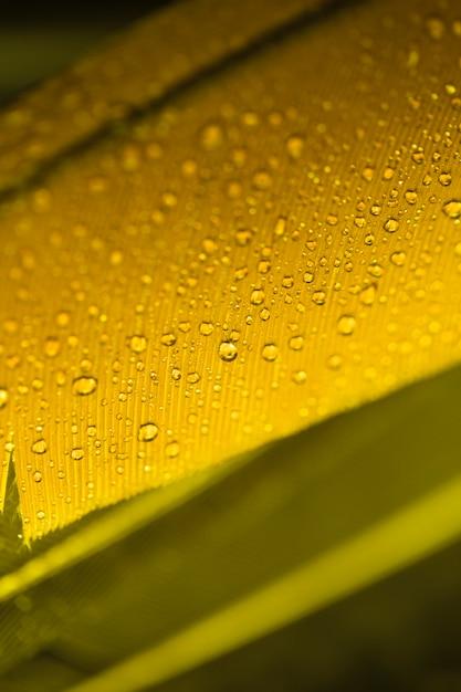 Detail der gelben feder mit wassertropfen Kostenlose Fotos