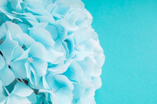 Detail der türkis hortensieblume Kostenlose Fotos