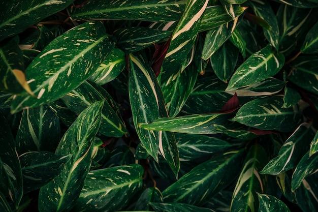 Dichte grüne vegetation im botanischen garten Kostenlose Fotos