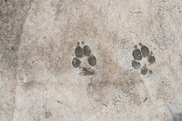 Die abdrücke des hundes auf zementbodenhintergrund Premium Fotos