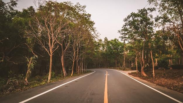 Die asphaltstraße biegt links zwischen den wäldern ab Premium Fotos
