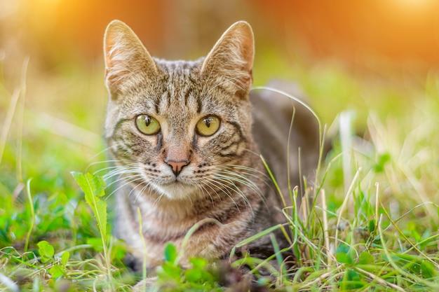 Die getigerte katze liegt im gras. Premium Fotos