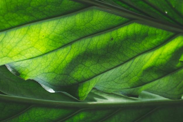 Die grünen blätter Premium Fotos