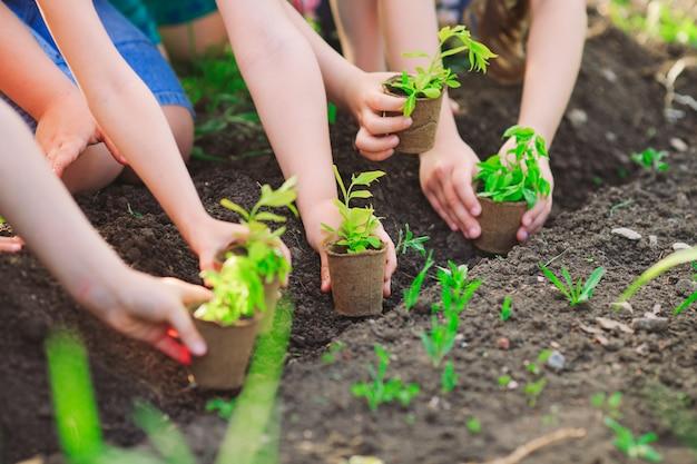 Die hände der kinder, die zusammen jungen baum auf schwarzem boden als das konzept der welt der rettung pflanzen Premium Fotos