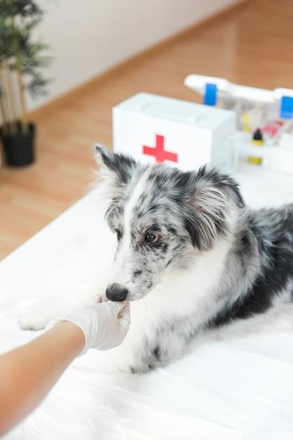 Die hand des weiblichen tierarztes, die den hund in der klinik einzieht Kostenlose Fotos