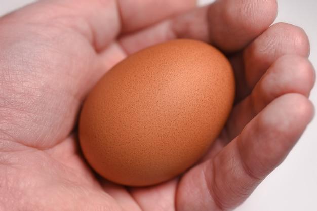 Die hand eines mannes hält ein ei. der ursprung des lebens Premium Fotos