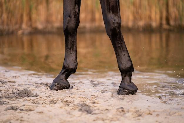 Die hufe eines pferdes, das am sandstrand eines kleinen sees entlang schlendert. ein pferd läuft auf dem wasser. kraft und schönheit Premium Fotos