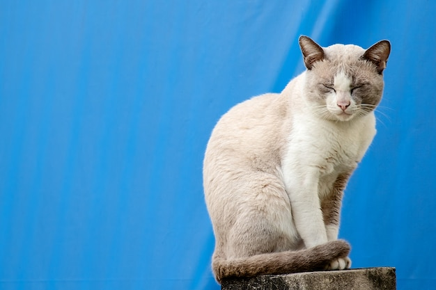 Die katze, die auf dem zaun des hauses gegen blauen segeltuchhintergrund sitzt Premium Fotos