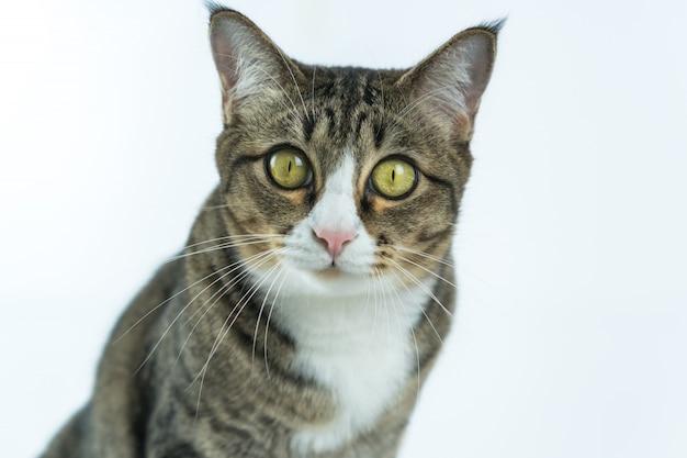 Die katzen sehen auf diese weise sehr süß aus. Premium Fotos
