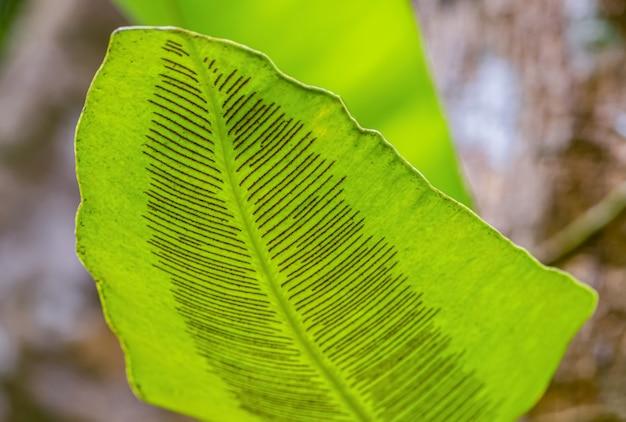 Die kunst des grünen blattes Premium Fotos