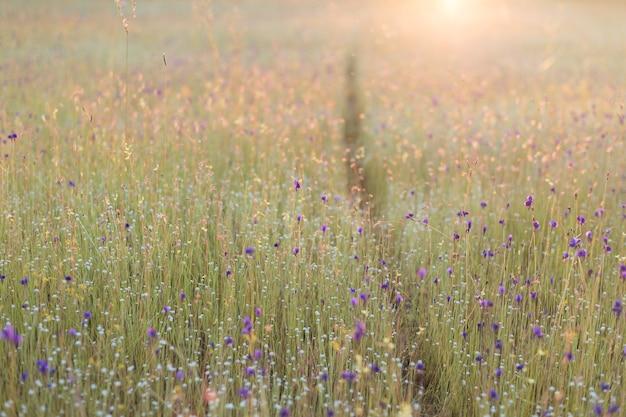 Die landschaft der wilden blumen ist natürlich vorkommend Premium Fotos
