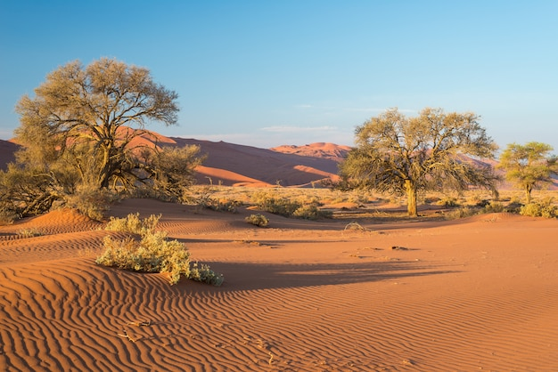 Die malerische sossusvlei und deadvlei, ton- und salzpfanne mit geflochtenen akazienbäumen, umgeben von majestätischen sanddünen Premium Fotos