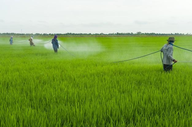 Die pestizide, landwirte, die schädlingsbekämpfungsmittel sprühen Premium Fotos
