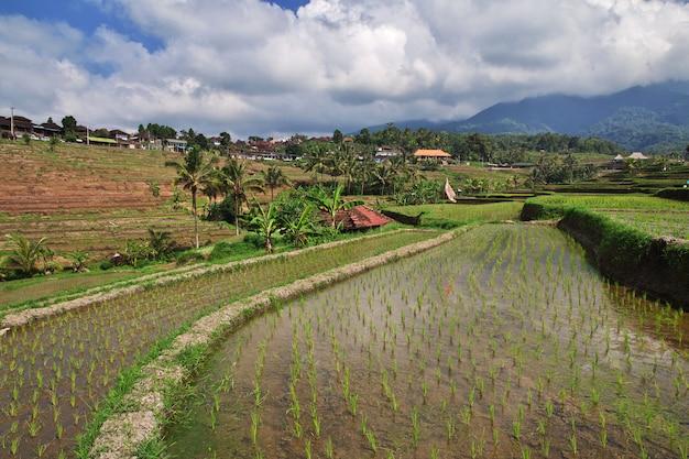 Die reisterrassen auf bali, indonesien Premium Fotos