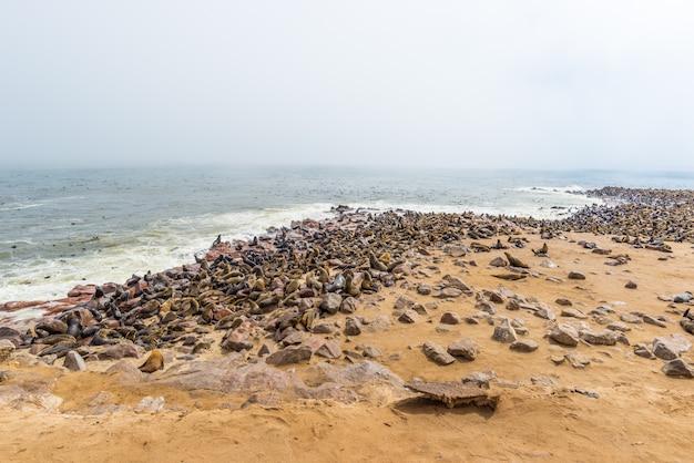Die robbenkolonie bei cape cross, an der atlantikküste von namibia, afrika Premium Fotos