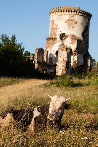 Die ruinen einer alten burg im dorf chervonograd. ukraine Premium Fotos