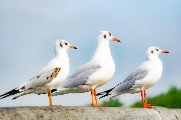 Die seemöwe, die auf brücke steht, vogel fliegt über dem meer, seemöwe schweben über tiefem blauem meer. Premium Fotos