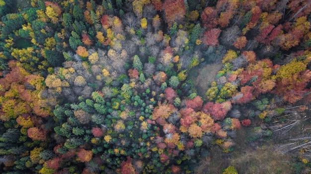 Die waldbäume von der draufsicht Premium Fotos