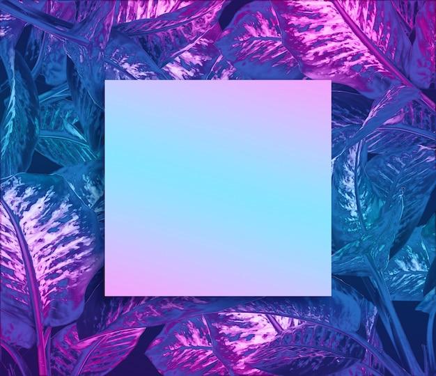 Dieffenbachia mit zweifarbigem effekt Premium Fotos
