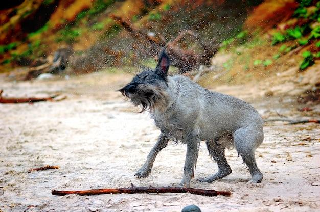 Dog shakin Kostenlose Fotos