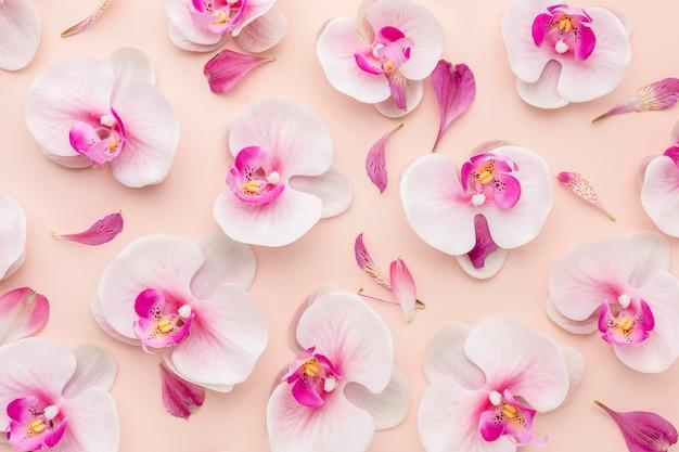 Draufsicht anordnung der orchideen Premium Fotos