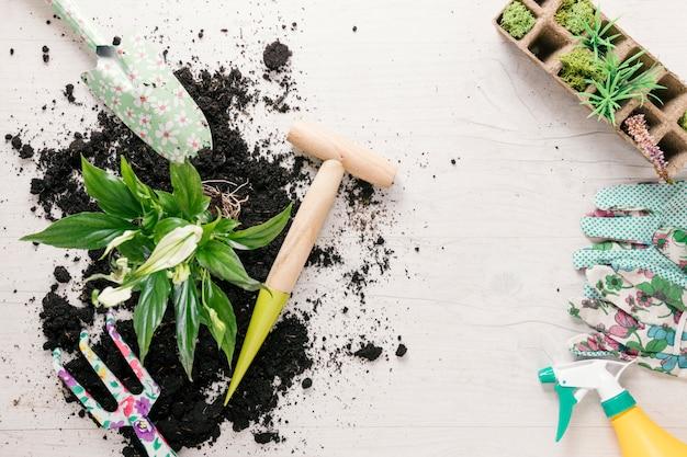 Draufsicht auf boden und pflanze mit gartengeräten auf dem tisch Kostenlose Fotos