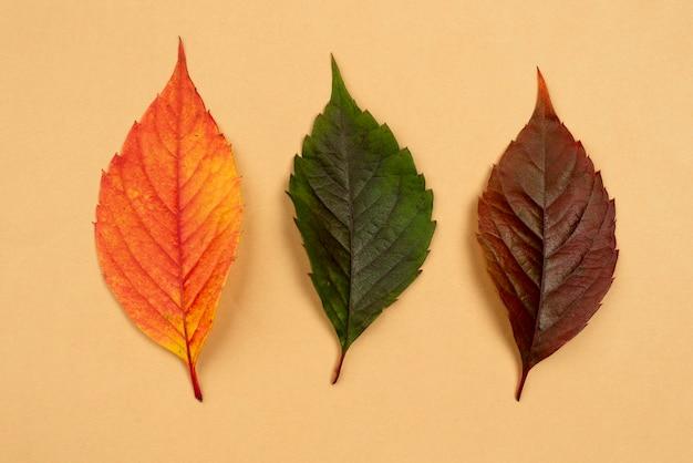 Draufsicht auf drei farbige blätter Premium Fotos