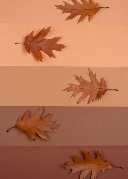 Draufsicht auf monochromatische linien mit blättern Kostenlose Fotos