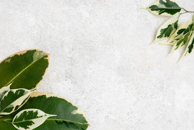 Draufsicht auf pflanzenblätter mit kopierraum Premium Fotos