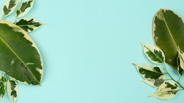 Draufsicht auf pflanzenblätter mit kopierraum Kostenlose Fotos