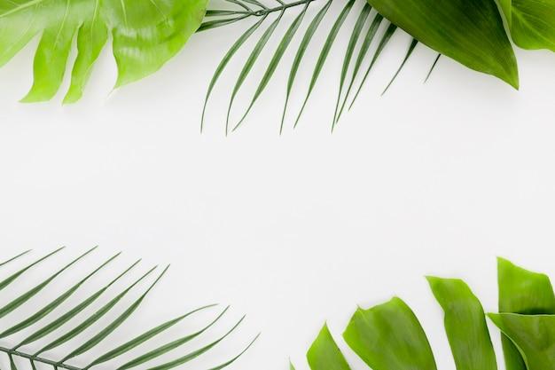 Draufsicht der dünnen pflanze mit monstera-blättern und kopienraum Kostenlose Fotos