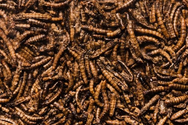 Draufsicht der köstlichen gebratenen würmer Kostenlose Fotos