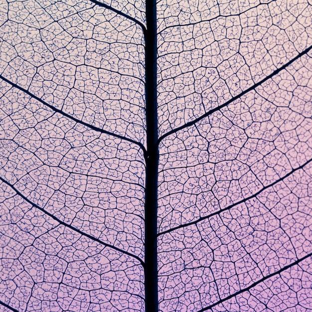 Draufsicht der transparenten blattbeschaffenheit Kostenlose Fotos
