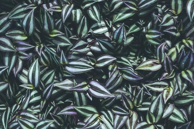 Draufsicht des blattpflänzchens im garten Premium Fotos