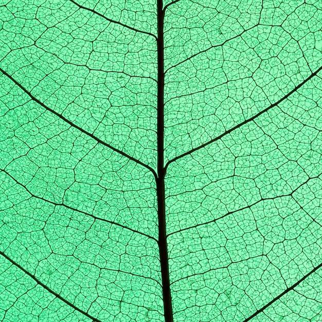 Draufsicht des durchscheinenden blattes des farbigen farbtons Premium Fotos