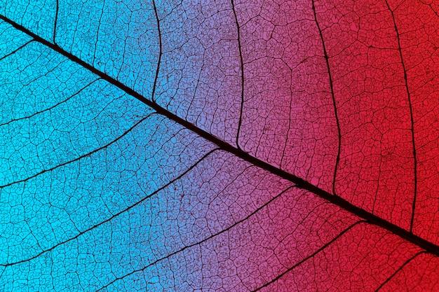 Draufsicht des farbigen strukturierten blattes Kostenlose Fotos