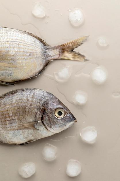 Draufsicht des fisches mit eiswürfeln Kostenlose Fotos