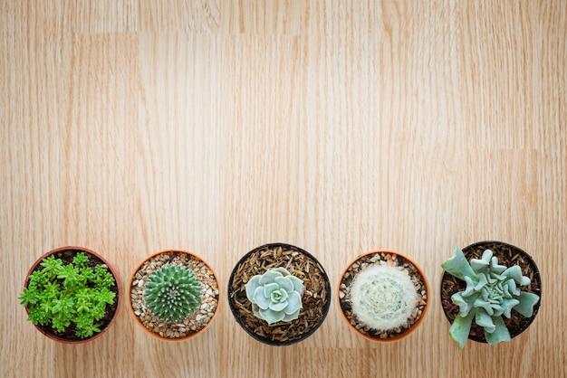 Draufsicht des mischungs-kaktus und des succulent auf hölzernem hintergrund Premium Fotos