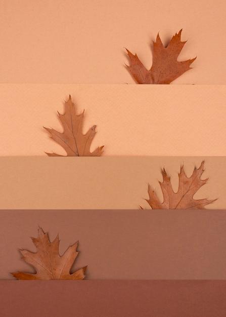 Draufsicht des monochromatischen musters und der blätter Kostenlose Fotos