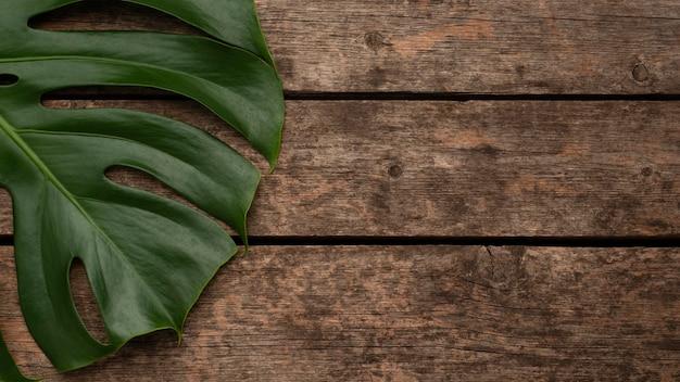 Draufsicht des monsterblatts mit kopienraum Premium Fotos