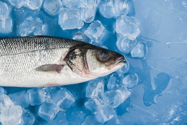 Draufsicht fisch auf eiswürfeln Kostenlose Fotos