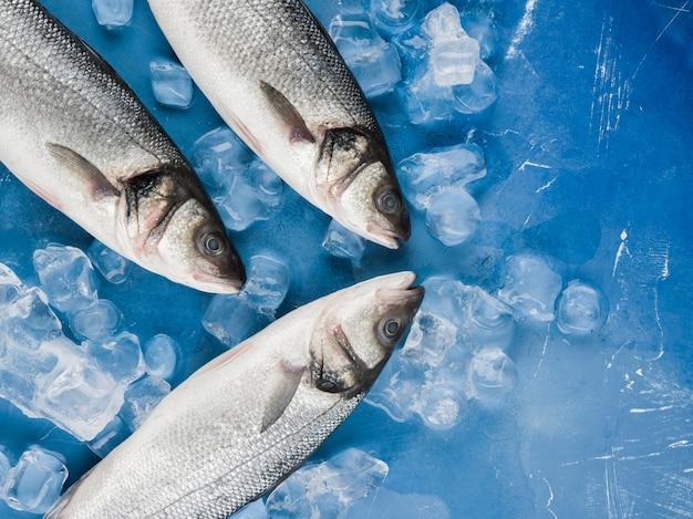 Draufsicht fisch mit eiswürfeln Kostenlose Fotos
