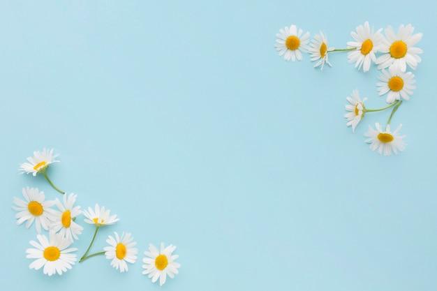 Draufsicht gänseblümchen in den ecken Premium Fotos